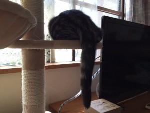 ネコ脱走防止金網➂