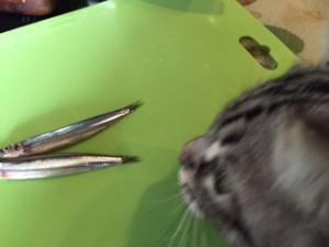 猫てづくりごはんきびなご
