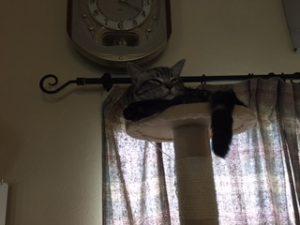 地震の合間にくつろぐ猫