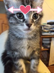 猫てづくりごはんの量は頭の鉢