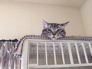 人生、、いや猫生は俯瞰です