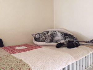 猫はネコだから仕方ないか