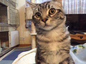 猫きょとん