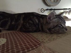 猫ケージの屋上で寝るネコ