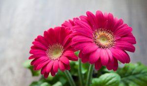 flower-631765_640